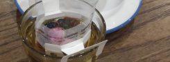 薬膳茶ワークショップ