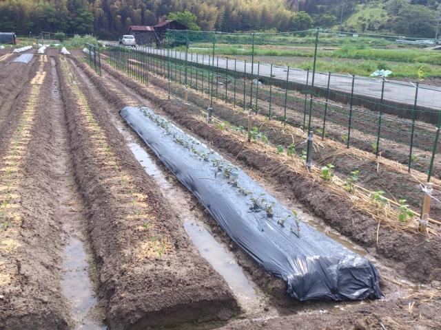 肥料屋 畑
