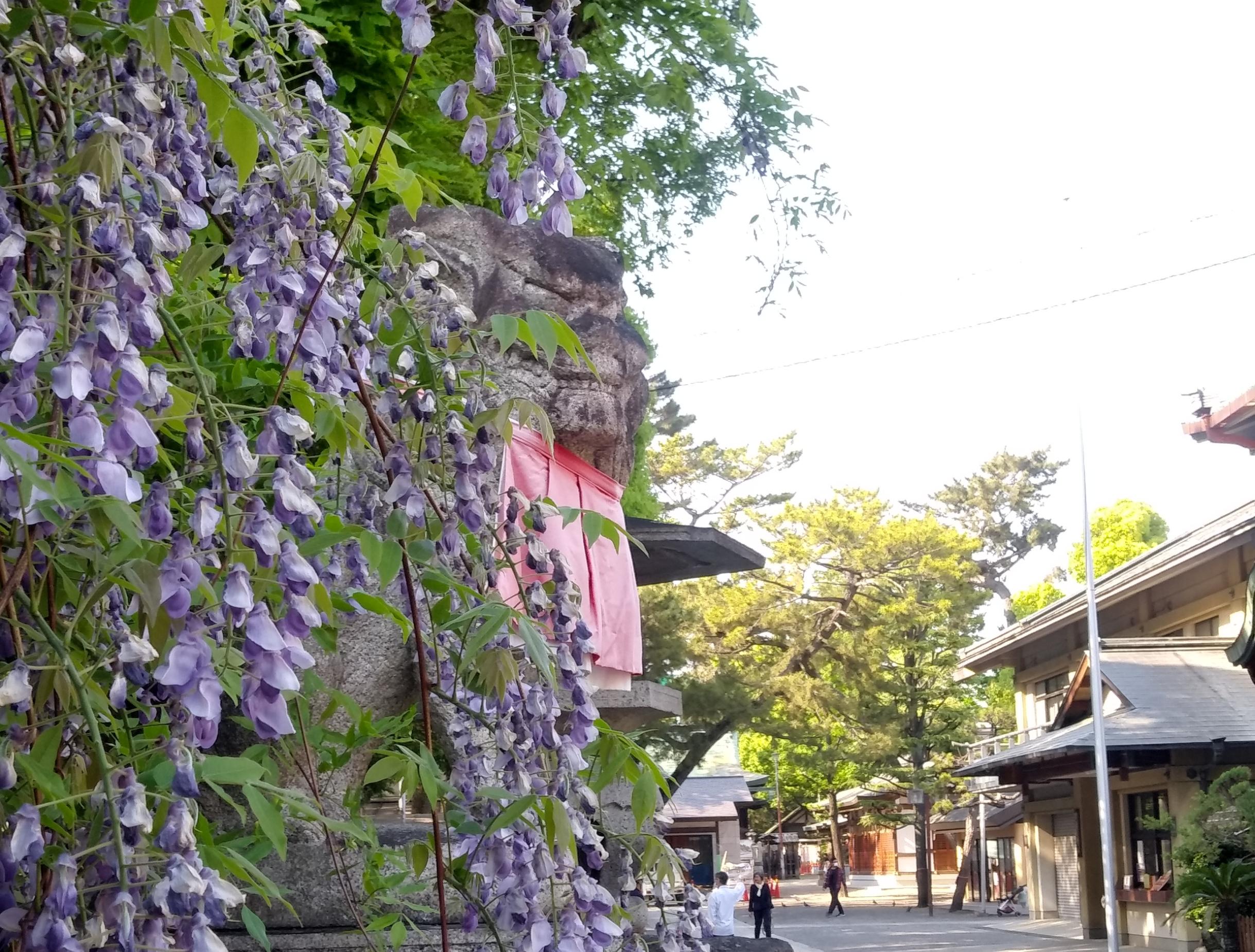 茨木神社 藤の花